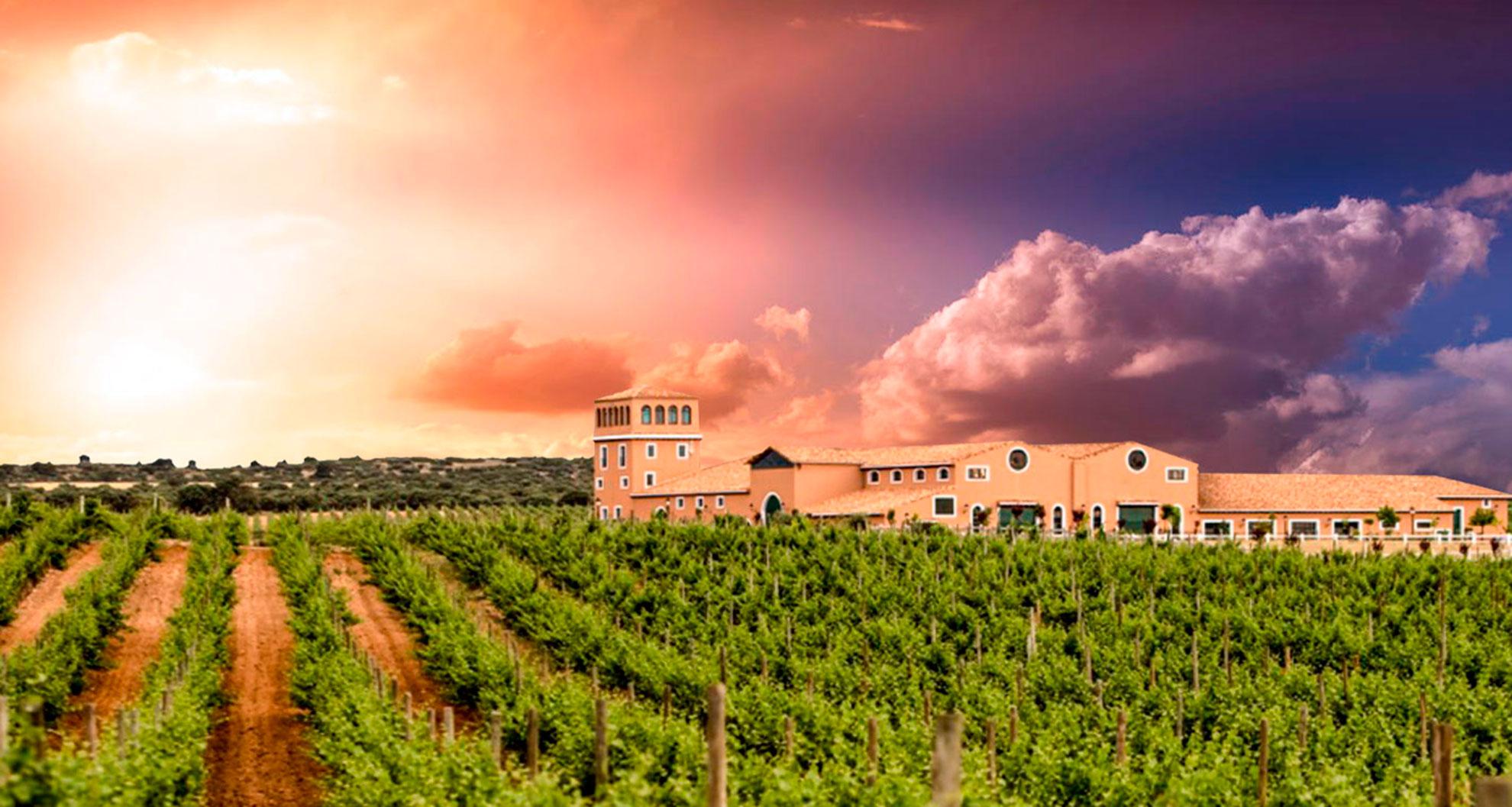 Bodegas de vino en Albacete de Don Quijote Wines